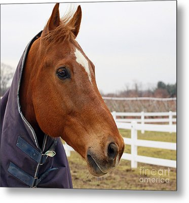 Metal Print featuring the photograph Handsome Horse by Denise Pohl