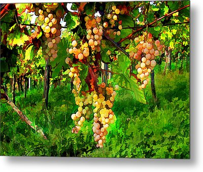 Hanging Grapes On The Vine Metal Print by Elaine Plesser