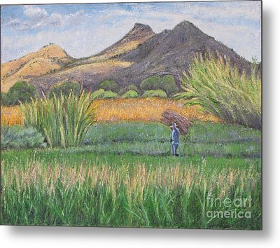 Harvesting In Yagul Metal Print by Judith Zur