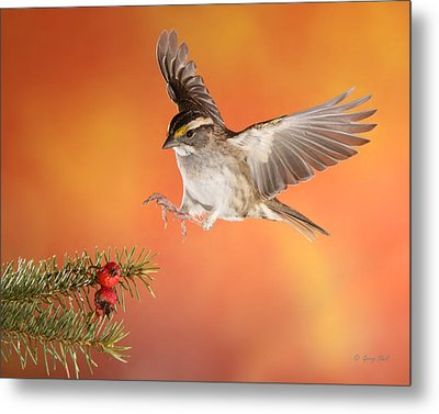 Metal Print featuring the photograph Here I Come by Gerry Sibell