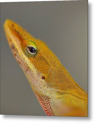 Metal Print featuring the photograph Here Lizard Lizard by Tanya Tanski