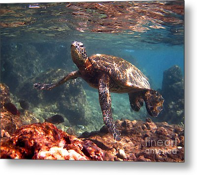 Honu In The Shallows Metal Print