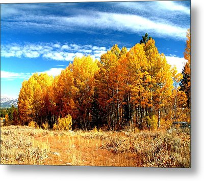 Hope Valley Aspens Metal Print by Michael Courtney