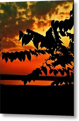 Horicon Marsh At Sunset Metal Print by Alisha Luby