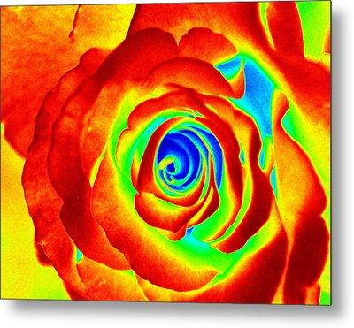 Hot Rose Metal Print