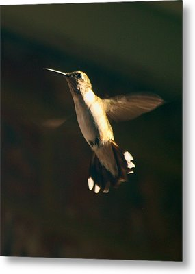 Humming Metal Print by Kim Schmidt