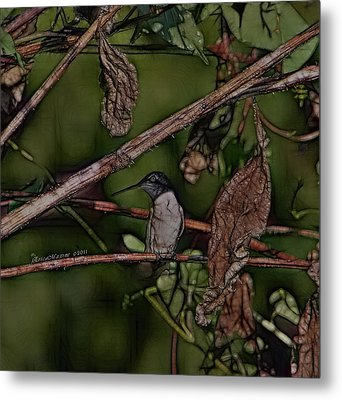 Metal Print featuring the photograph Hummingbird Waiting For Dinner by EricaMaxine  Price