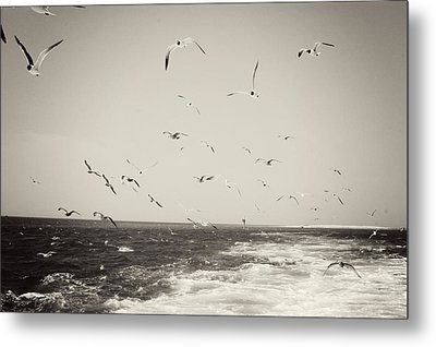 Hungry Metal Print by Jessica Wilson