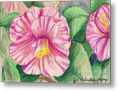 Hybiscus Pink And White Metal Print by Jamey Balester
