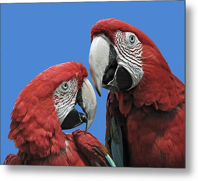 Metal Print featuring the photograph I Told You So by Rodney Campbell
