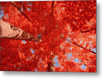 Impression Of Red Maple Metal Print by Charline Xia