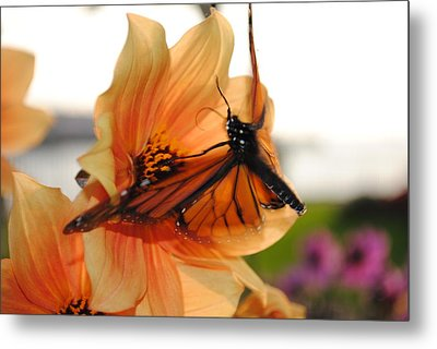 Metal Print featuring the photograph In Flight... by Michael Frank Jr