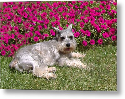 In The Garden Metal Print by Diane Ferguson