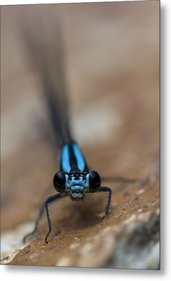 Metal Print featuring the photograph Inquisitive by Rob Hemphill