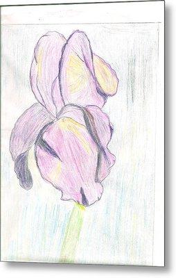 Iris Sketch Metal Print by Carolyn Donnell