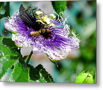 Metal Print featuring the photograph It's A Passion by Linda Mesibov