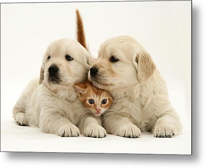 Kitten With Puppies Metal Print