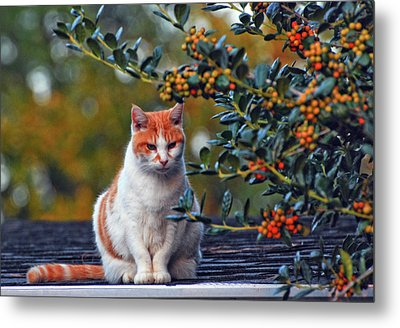Kitty On The Roof Metal Print by Margaret Palmer