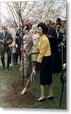 Lady Bird Johnson Planting A Tree Metal Print by Everett