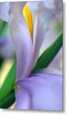 Lavender Iris Metal Print by Kathy Yates