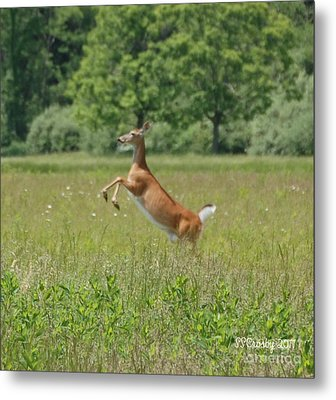 Leaping White-tail Deer Metal Print