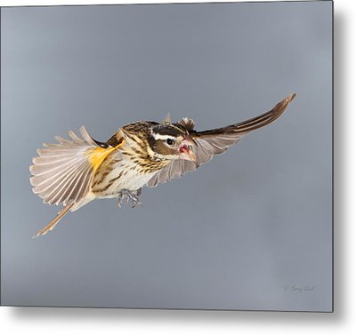 Metal Print featuring the photograph Leave Him Alone by Gerry Sibell