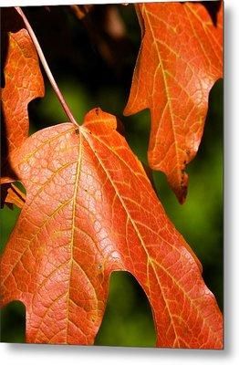 Leaves Of Orange Metal Print by Beth Akerman