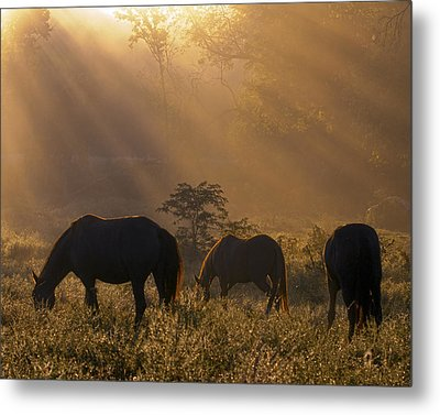 Let There Be Light Metal Print by Ron  McGinnis