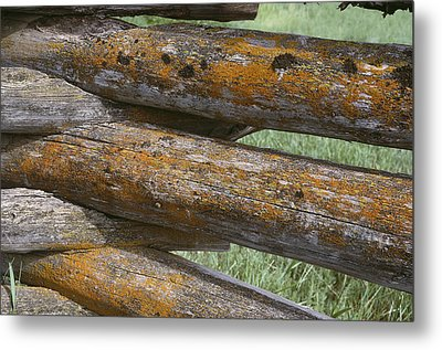 Lichens Growing On A Corral Fence Metal Print by Stephen Sharnoff