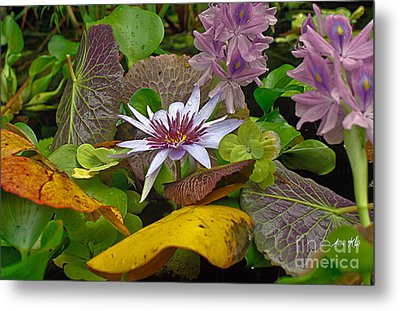 Metal Print featuring the photograph Lilies No. 35 by Anne Klar