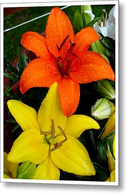 Lillies In Vermont Metal Print by Frank Wickham