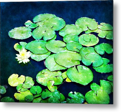 Lily Pads And Lotus Metal Print by Tammy Wetzel