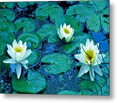Lily Three Metal Print by Debra     Vatalaro