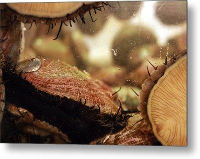 Live Abalone  The Shell Metal Print by Jennifer Bright