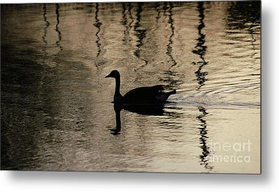 Lonely Metal Print by Vilas Malankar