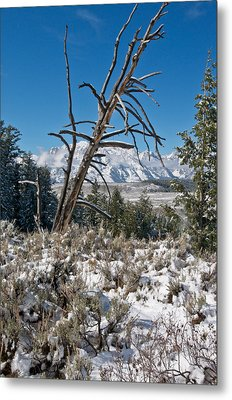 Lonesome Pine Metal Print by Jay Seeley