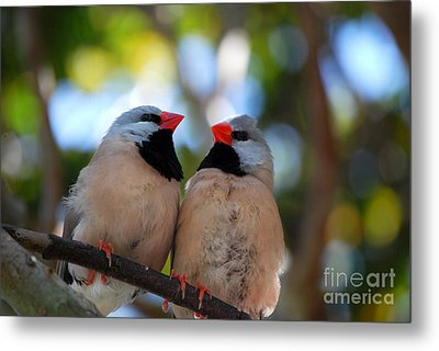 Metal Print featuring the photograph Love Birds by Linda Mesibov