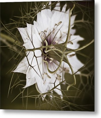 Love's Thorns Metal Print by Tony Locke