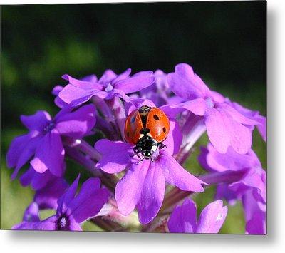 Lucky Ladybug Metal Print