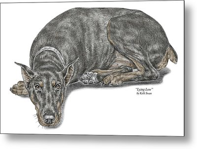 Metal Print featuring the drawing Lying Low - Doberman Pinscher Dog Print Color Tinted by Kelli Swan