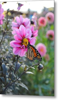 Metal Print featuring the photograph Making Things New by Michael Frank Jr