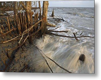 Mangrove Trees Protect The Coast Metal Print by Tim Laman