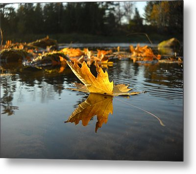 Maple Leaf Floating In River Metal Print