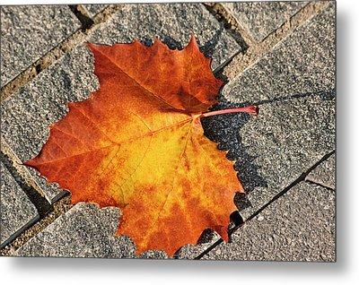 Maple Leaf In Fall Metal Print by Carolyn Marshall