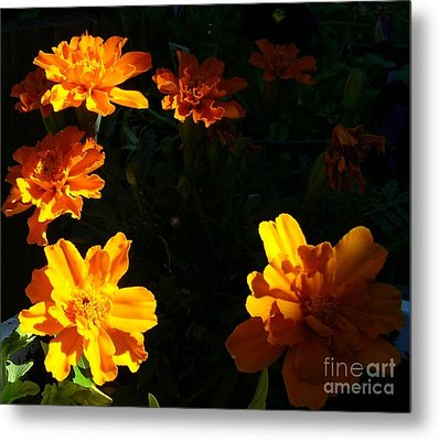 Metal Print featuring the photograph Marigold Sunrise by Jim Sauchyn