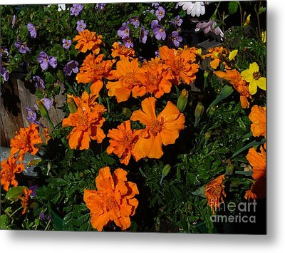 Metal Print featuring the photograph Marigolds by Jim Sauchyn