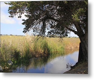 Metal Print featuring the photograph Marsh Reflections by Jan Cipolla