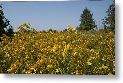 Meadow At Terapin Park Metal Print by Charles Kraus