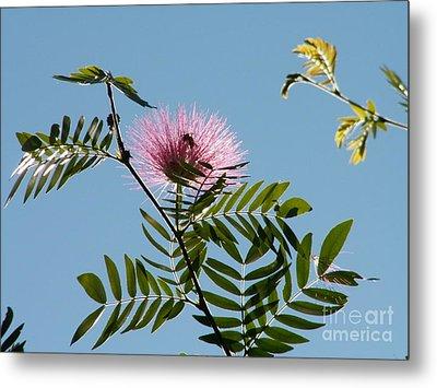 Mimosa Flower  Metal Print by Theresa Willingham