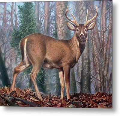 Missouri Whitetail Deer Metal Print